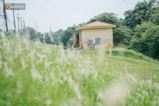 Vô Diện đã ghé thăm triền đê cỏ tranh trắng muốt ở Hà Nội, còn bạn thì sao? - Ảnh 1.