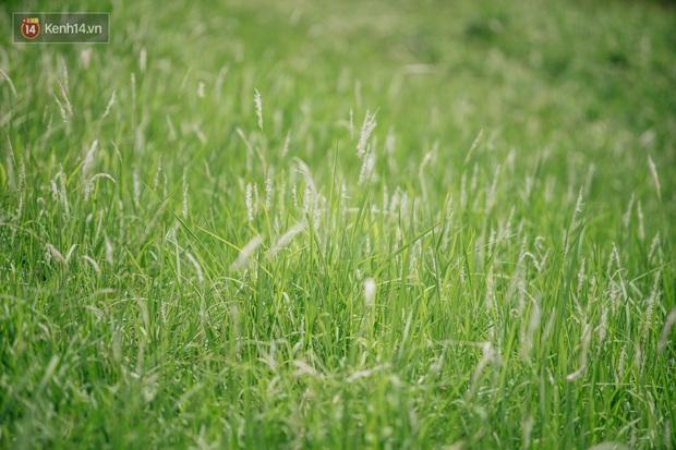 Vô Diện đã ghé thăm triền đê cỏ tranh trắng muốt ở Hà Nội, còn bạn thì sao? - Ảnh 2.