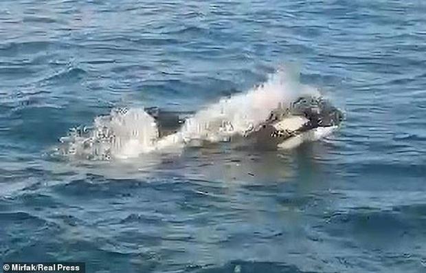 Cá voi sát thủ bao vây, tấn công dữ dội tàu thuyền ở Tây Ban Nha  - Ảnh 2.