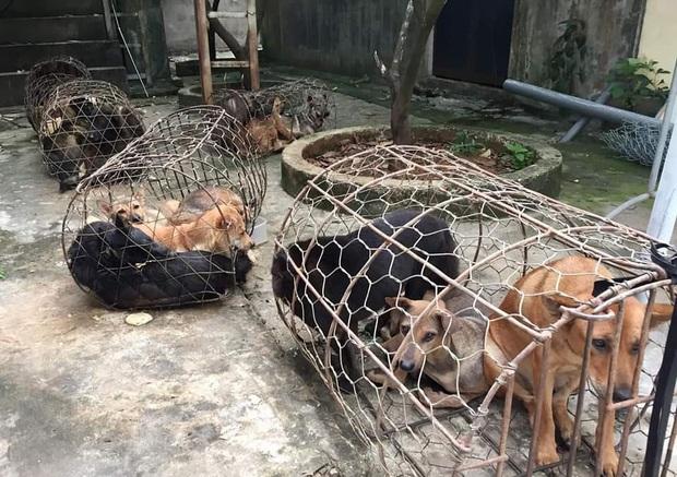Bắt hai nhóm cẩu tặc trộm nửa tấn chó mỗi đêm - Ảnh 2.