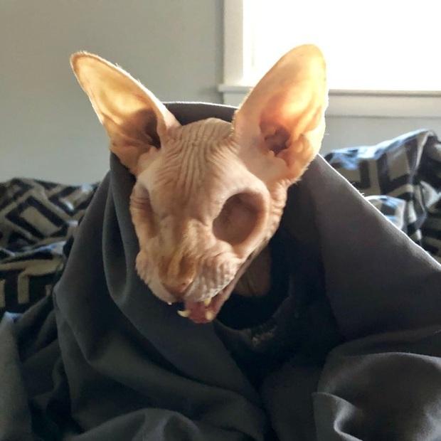 Bức ảnh con mèo không mắt gây ám ảnh nhưng phía sau là câu chuyện xúc động, có người còn xăm hình quái vật này lên cơ thể - Ảnh 1.