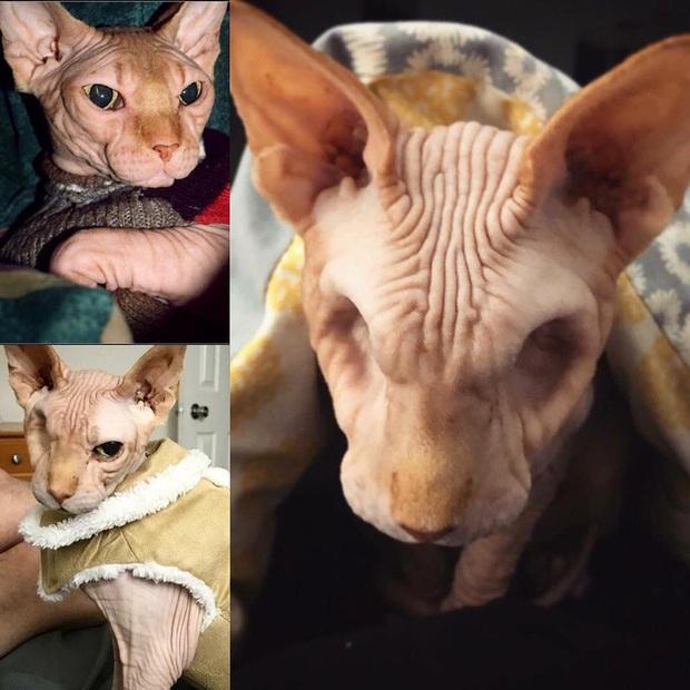 Bức ảnh con mèo không mắt gây ám ảnh nhưng phía sau là câu chuyện xúc động, có người còn xăm hình quái vật này lên cơ thể - Ảnh 2.