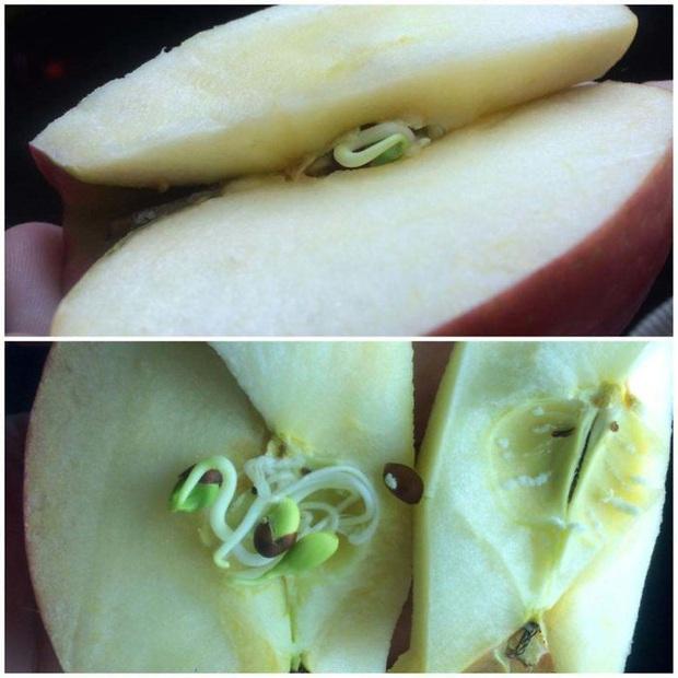 Mua trái cây về nhà ăn, dân mạng hoảng hồn khi chứng kiến những hình ảnh siêu dị biệt: Thế này thì vứt đi được chưa? - Ảnh 9.