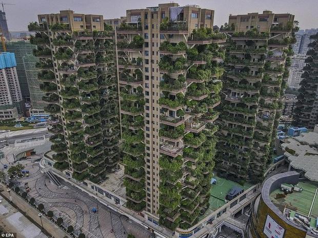 Trung Quốc tham vọng xây thiên đường sinh thái nhưng lại hóa thành phố ma vì… muỗi - Ảnh 8.