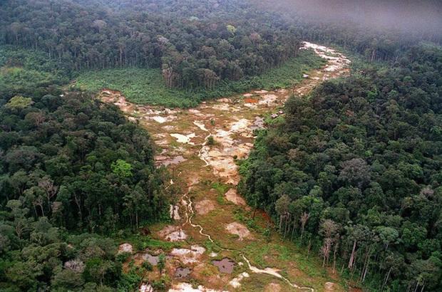 Thế giới bị mất 100 triệu ha rừng trong 2 thập kỷ - Ảnh 1.