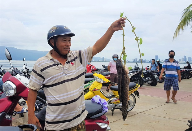 Sau bão, người dân Đà Nẵng ra các miệng cống xả, cửa sông quăng chài bắt cá khủng - Ảnh 7.