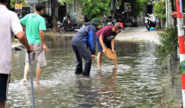 Clip: Người Đà Nẵng thích thú mang rổ ra đường phố bắt cá sau bão số 5 - Ảnh 2.