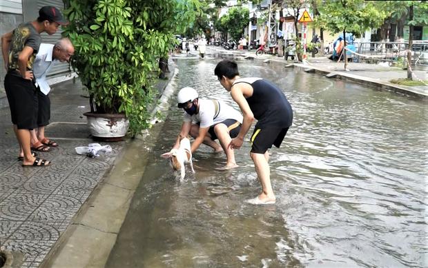 Clip: Người Đà Nẵng thích thú mang rổ ra đường phố bắt cá sau bão số 5 - Ảnh 3.
