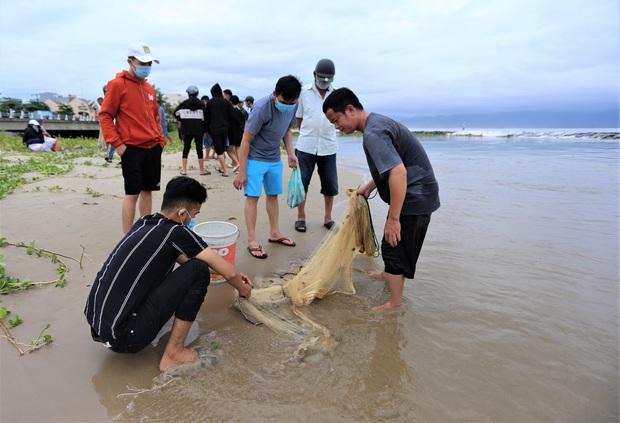 Sau bão, người dân Đà Nẵng ra các miệng cống xả, cửa sông quăng chài bắt cá khủng - Ảnh 8.