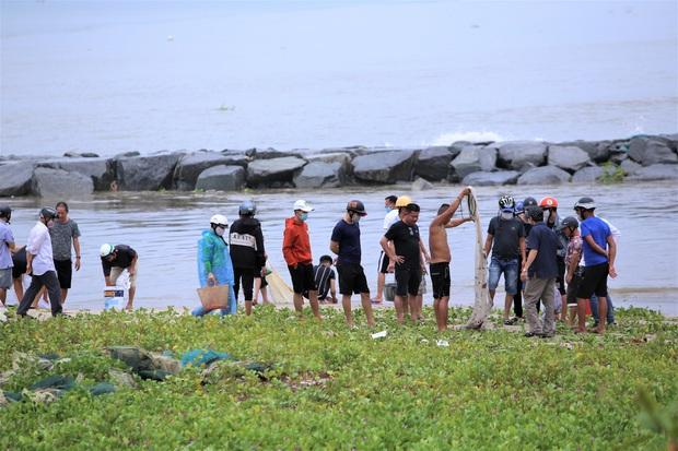 Sau bão, người dân Đà Nẵng ra các miệng cống xả, cửa sông quăng chài bắt cá khủng - Ảnh 9.