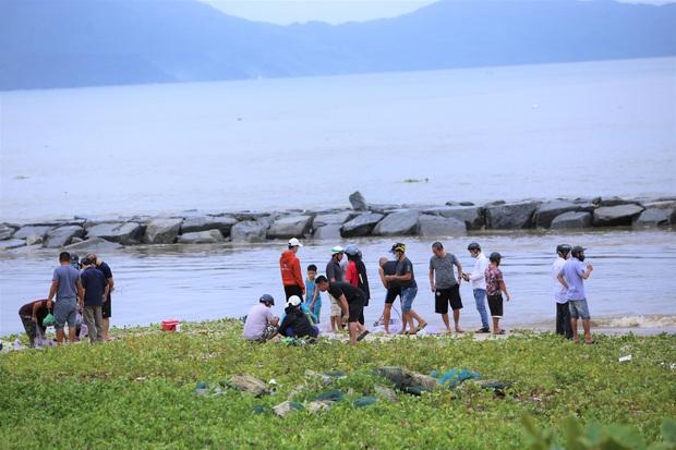 Sau bão, người dân Đà Nẵng ra các miệng cống xả, cửa sông quăng chài bắt cá khủng - Ảnh 4.