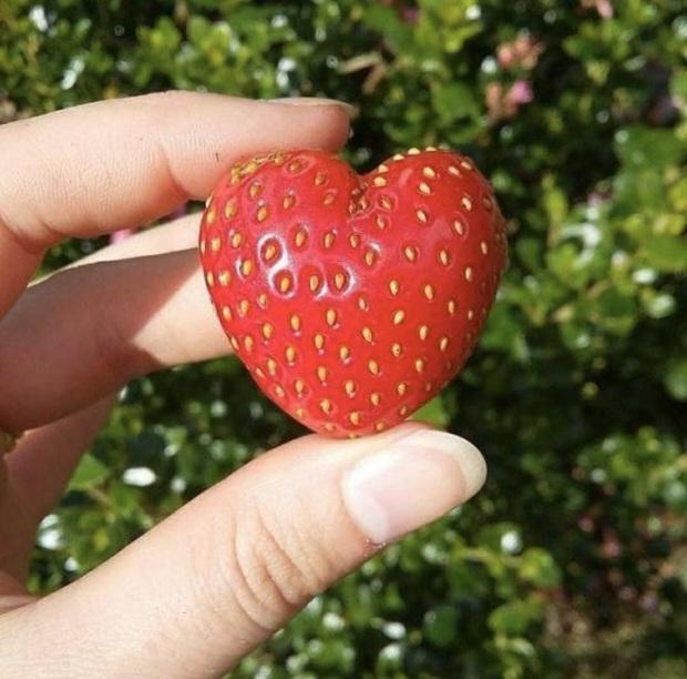 3 loại trái cây dễ chứa nhiều ký sinh trùng, nếu không rửa sạch kỹ lưỡng, ăn vào sẽ rất dễ bị chúng ký sinh trong cơ thể - Ảnh 3.