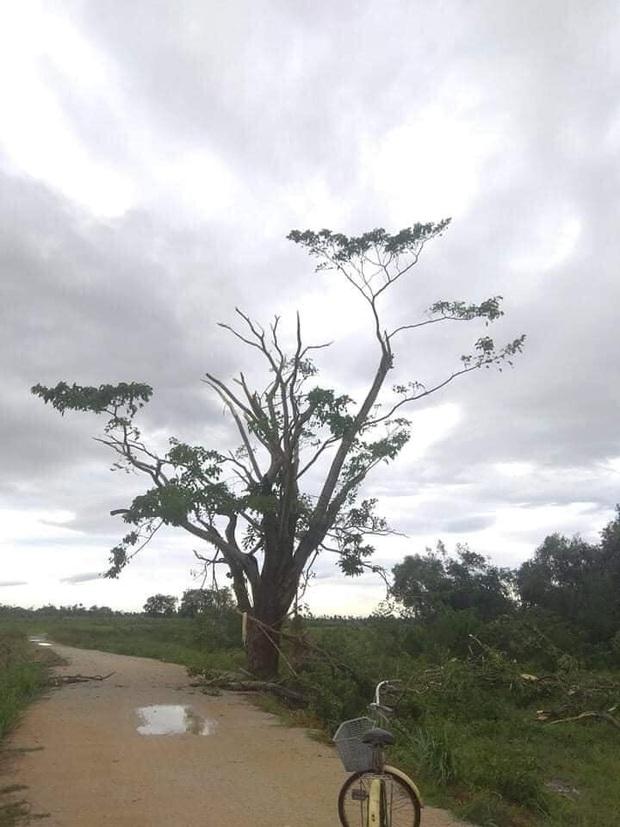 Bối cảnh bom tấn Việt tan hoang vì bão số 5: Hết cây cô đơn Mắt Biếc đến phim trường Gái Già Lắm Chiêu 5 bị quật tơi tả - Ảnh 3.