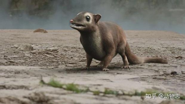 Giải đáp thắc mắc loài dơi đã tiến hóa từ con vật gì? Tổ tiên của chúng có phải là loài chuột không? - Ảnh 3.