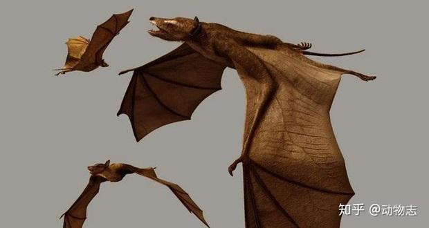 Giải đáp thắc mắc loài dơi đã tiến hóa từ con vật gì? Tổ tiên của chúng có phải là loài chuột không? - Ảnh 6.