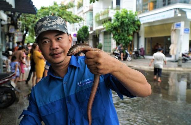 Clip: Người Đà Nẵng thích thú mang rổ ra đường phố bắt cá sau bão số 5 - Ảnh 6.