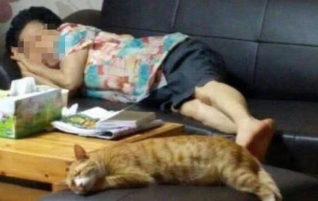 Gửi mèo cưng nhờ mẹ chăm hộ để đi công tác nửa tháng, cô gái trở về liền ngỡ ngàng với diện mạo của con vật đến nỗi không nhận ra - Ảnh 1.
