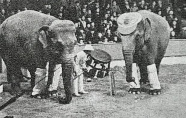 Bức hình như tranh vẽ nhưng lại là ảnh chụp và phía sau là câu chuyện con voi bất hạnh nhất trong lịch sử khiến nhiều người rơi lệ - Ảnh 1.