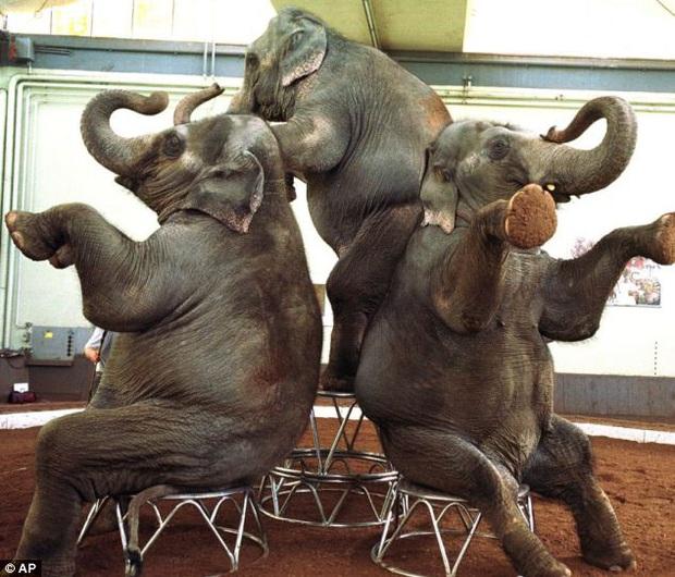 Bức hình như tranh vẽ nhưng lại là ảnh chụp và phía sau là câu chuyện con voi bất hạnh nhất trong lịch sử khiến nhiều người rơi lệ - Ảnh 2.