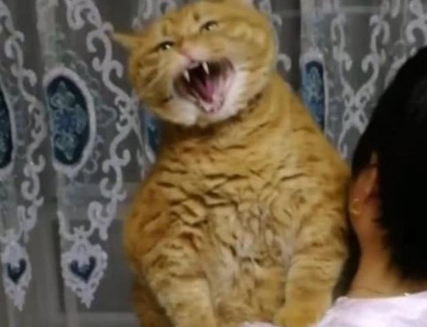Gửi mèo cưng nhờ mẹ chăm hộ để đi công tác nửa tháng, cô gái trở về liền ngỡ ngàng với diện mạo của con vật đến nỗi không nhận ra - Ảnh 3.