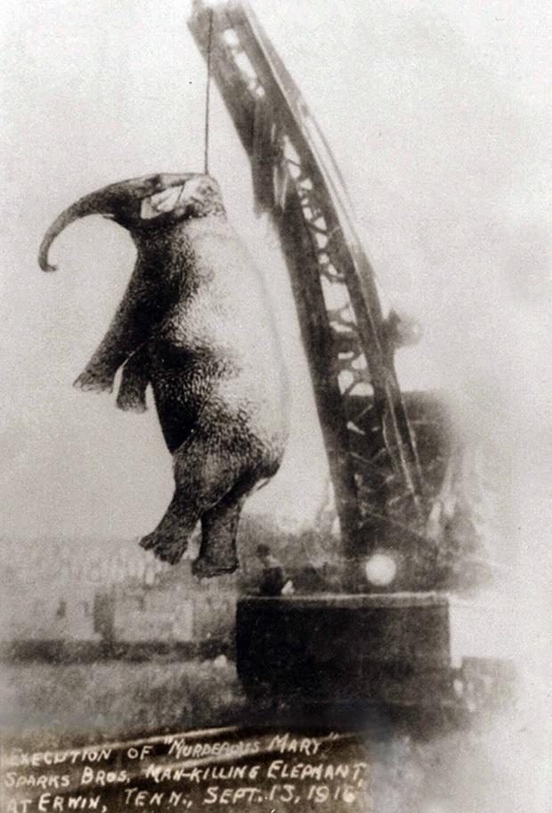 Bức hình như tranh vẽ nhưng lại là ảnh chụp và phía sau là câu chuyện con voi bất hạnh nhất trong lịch sử khiến nhiều người rơi lệ - Ảnh 4.