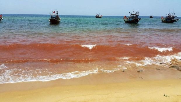 Đi du lịch Vũng Tàu, chàng trai hoảng hốt khi phát hiện nước biển chuyển sang màu cà phê kỳ lạ: Nguyên nhân thực sự là gì? - Ảnh 3.
