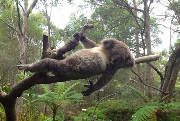 25 chú động vật chán làm kiếp thú, muốn bùng cháy với ước mơ siêu mẫu catwalk - Ảnh 2.