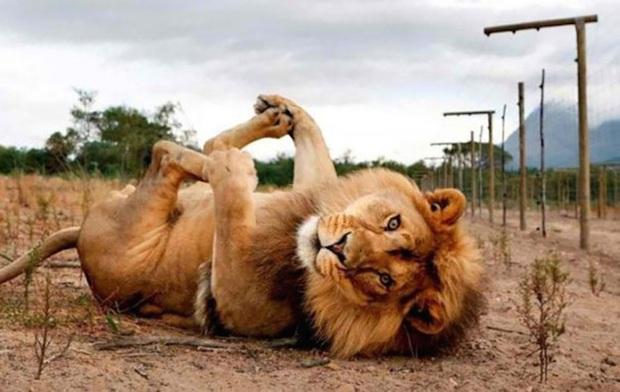 25 chú động vật chán làm kiếp thú, muốn bùng cháy với ước mơ siêu mẫu catwalk - Ảnh 10.