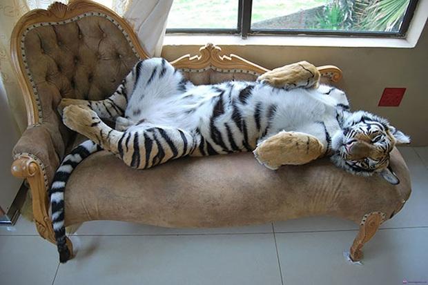 25 chú động vật chán làm kiếp thú, muốn bùng cháy với ước mơ siêu mẫu catwalk - Ảnh 13.