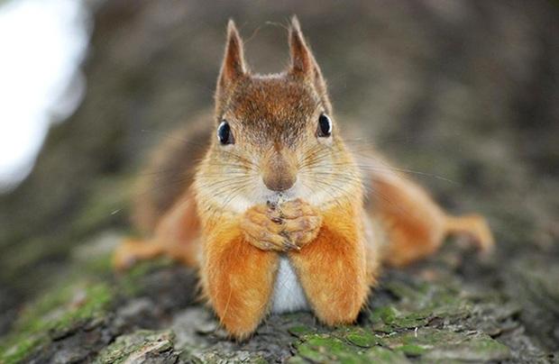 squirrel-16006844987341260132113.jpg