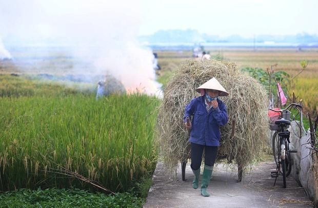 Từ 01/01/2021, Hà Nội không còn hoạt động đốt rơm rạ  - Ảnh 1.