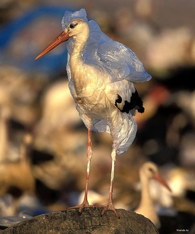 Loạt ảnh khiến bất kỳ ai nhìn thấy cũng ám ảnh về sức ảnh hưởng kinh hoàng của ô nhiễm môi trường đối với các loài động vật - Ảnh 12.