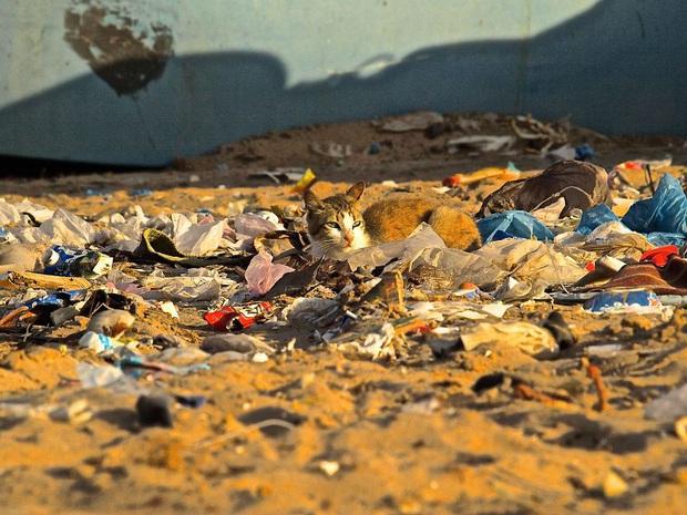 Loạt ảnh khiến bất kỳ ai nhìn thấy cũng ám ảnh về sức ảnh hưởng kinh hoàng của ô nhiễm môi trường đối với các loài động vật - Ảnh 18.