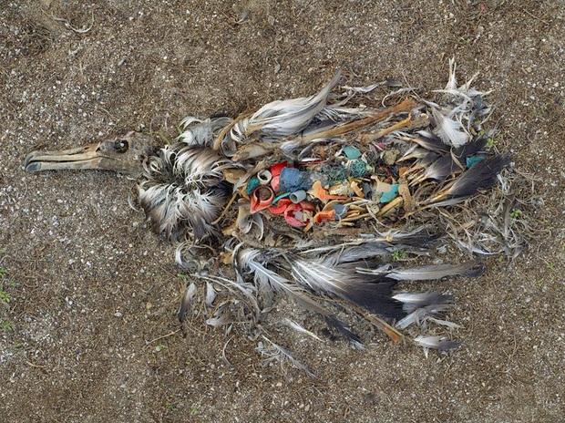 Loạt ảnh khiến bất kỳ ai nhìn thấy cũng ám ảnh về sức ảnh hưởng kinh hoàng của ô nhiễm môi trường đối với các loài động vật - Ảnh 19.