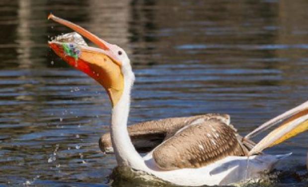 Loạt ảnh khiến bất kỳ ai nhìn thấy cũng ám ảnh về sức ảnh hưởng kinh hoàng của ô nhiễm môi trường đối với các loài động vật - Ảnh 3.