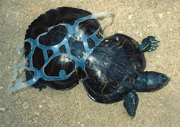 Loạt ảnh khiến bất kỳ ai nhìn thấy cũng ám ảnh về sức ảnh hưởng kinh hoàng của ô nhiễm môi trường đối với các loài động vật - Ảnh 7.