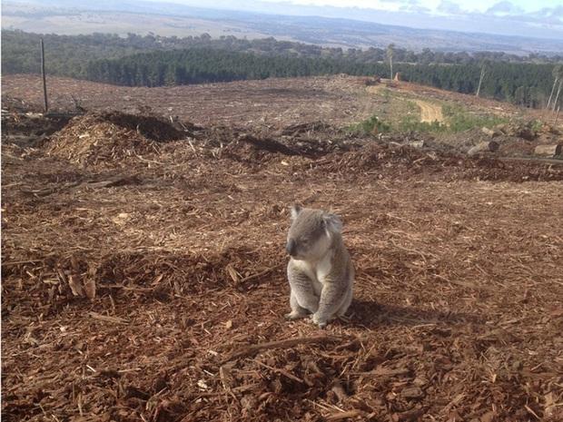 Loạt ảnh khiến bất kỳ ai nhìn thấy cũng ám ảnh về sức ảnh hưởng kinh hoàng của ô nhiễm môi trường đối với các loài động vật - Ảnh 10.