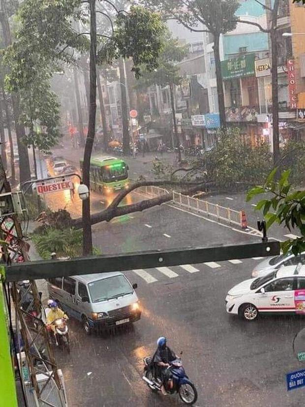 Nạn nhân bị cây xanh bật gốc đè trúng trong cơn mưa lớn ở Sài Gòn đã tử vong - Ảnh 1.