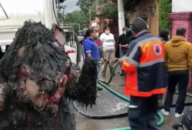 Người phụ nữ chết đuối trong nhà vì ngập lụt, sau khi thông cống phát hiện con chuột khổng lồ cùng hàng tấn rác thải gây tắc cứng - Ảnh 2.