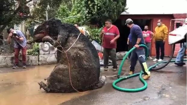 Người phụ nữ chết đuối trong nhà vì ngập lụt, sau khi thông cống phát hiện con chuột khổng lồ cùng hàng tấn rác thải gây tắc cứng - Ảnh 1.