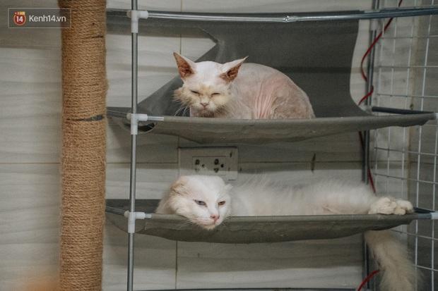 Chàng trai 24 tuổi bỏ công việc ổn định để cứu trợ mèo, mái ấm của các bé mèo lên hãng thông tấn AFP của Pháp - Ảnh 5.