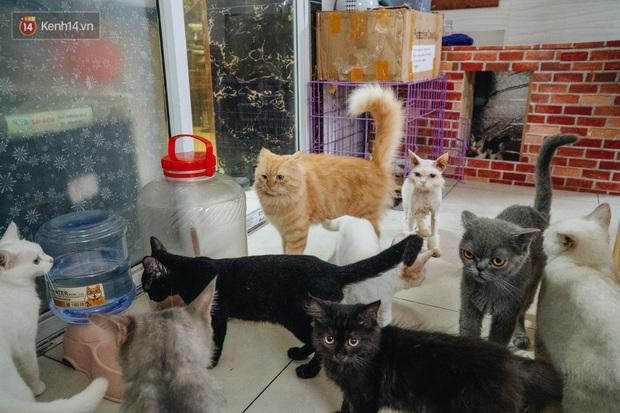 Chàng trai 24 tuổi bỏ công việc ổn định để cứu trợ mèo, mái ấm của các bé mèo lên hãng thông tấn AFP của Pháp - Ảnh 11.