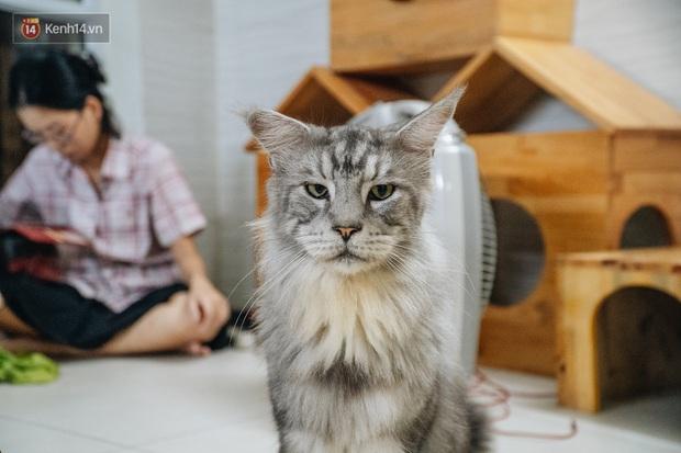 Chàng trai 24 tuổi bỏ công việc ổn định để cứu trợ mèo, mái ấm của các bé mèo lên hãng thông tấn AFP của Pháp - Ảnh 12.