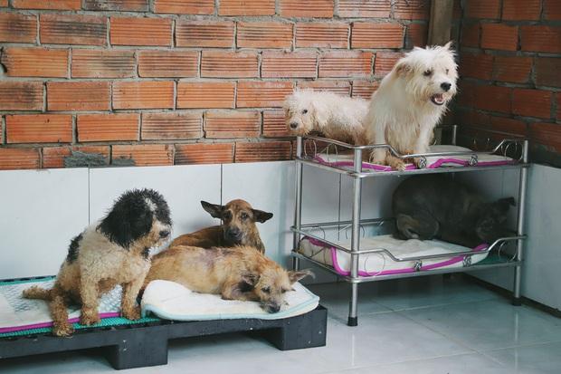 Người phụ nữ nuôi chó mèo bị bại liệt suốt 6 năm, bỏ cả công việc để chăm sóc đàn con của mình - Ảnh 4.