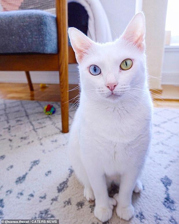 Bị chủ vứt ra đường vì mắt 2 màu và chân có nhiều ngón, cô mèo mắc hội chứng lạ khiến hội yêu động vật thổn thức, đòi nhận nuôi bằng được - Ảnh 4.