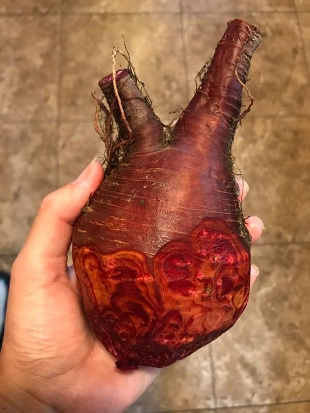 """12 lần các bác nông dân """"luỵ tim"""" vì những loại hoa quả biến đổi thành hình dạng """"í ẹ"""", thế mới thấy tự nhiên thật thần kỳ - Ảnh 11."""