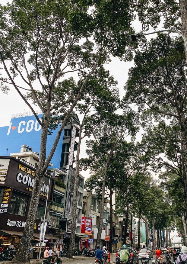 Sau vụ cây xanh bật gốc đè chết người: Vẫn còn nhiều cây đã già cỗi có rễ lộ thiên, nhánh vươn ra mặt đường ở Sài Gòn - Ảnh 7.