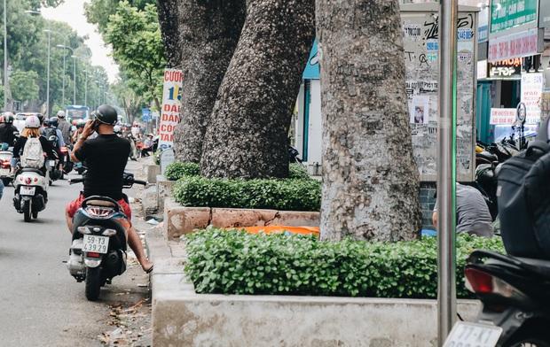 Sau vụ cây xanh bật gốc đè chết người: Vẫn còn nhiều cây đã già cỗi có rễ lộ thiên, nhánh vươn ra mặt đường ở Sài Gòn - Ảnh 11.