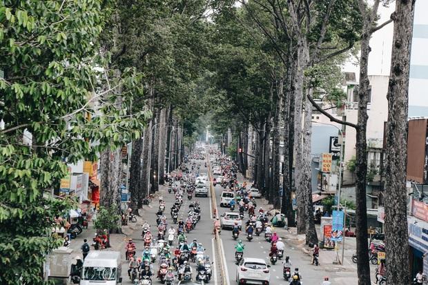 Sau vụ cây xanh bật gốc đè chết người: Vẫn còn nhiều cây đã già cỗi có rễ lộ thiên, nhánh vươn ra mặt đường ở Sài Gòn - Ảnh 2.