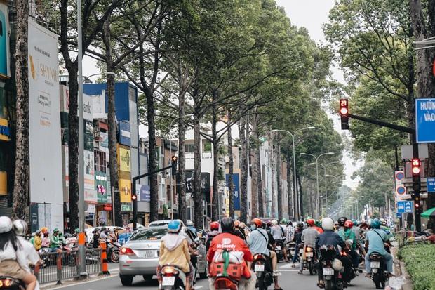 Sau vụ cây xanh bật gốc đè chết người: Vẫn còn nhiều cây đã già cỗi có rễ lộ thiên, nhánh vươn ra mặt đường ở Sài Gòn - Ảnh 16.